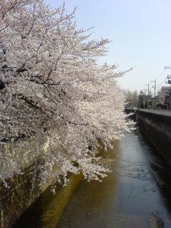 image/hana-bear-2006-04-01T19:37:53-1.jpg